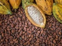 cocoa beans - product's photo