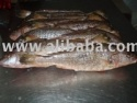 yellow croaker (corvina rubia) - product's photo
