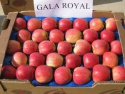 wholesale fresh royal gala apples - product's photo
