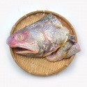 mackerel/indian mackerel/spanish mackerel - product's photo