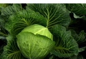 fresh cabbage  - product's photo