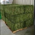 dried alfalfa hay - product's photo