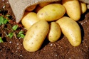 potato for sale  - product's photo