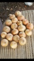 good quality onions for sale - product's photo