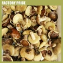 suillus mashroom - product's photo