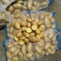 fresh potatoes - product's photo