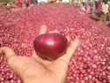 onions - product's photo