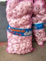 fresh normal white garlic  - product's photo