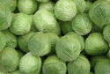 organic green cabbage - product's photo