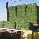alfalfa hay - product's photo