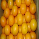 fresh orange for sale  - product's photo