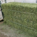 high quality animal feed alfalfa meal / alfalfa hay for sale  - product's photo