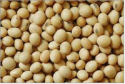 soybean seeds - product's photo