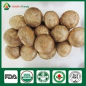 oak tree mushrooms - product's photo