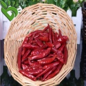 chili dried pepper - product's photo
