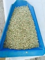 green lentils - product's photo