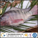 frozen tilapia - product's photo