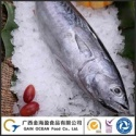 wild caught bonito frozen - product's photo