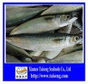 frozen pacific mackerel - product's photo