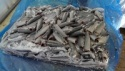 frozen mackerel hgt - product's photo
