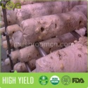 white frsh oyster mushrom - product's photo