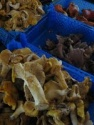 chanterelles - product's photo
