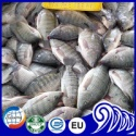 whole tilapia fish - product's photo