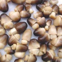 canned straw mushroom - product's photo