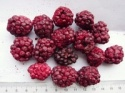 freeze dried blackberry - product's photo