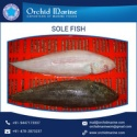 fresh frozen sole fish seafood - product's photo
