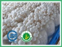 fresh white beech mushroom - product's photo
