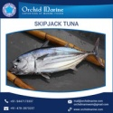marine delicious food skipjack tuna  - product's photo