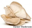 iqf baby oyster mushroom - product's photo