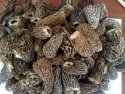 morel mushrooms - product's photo