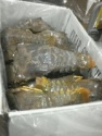 frozen iqf slipper lobster - product's photo