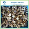porcini mushroom cultivation - product's photo