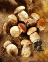 dried boletus edulis - product's photo