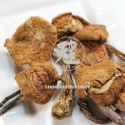 flower mushroom - product's photo
