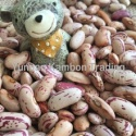 light speckled kidney beans long - product's photo