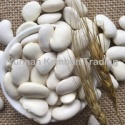 high quality yunnan large white kidney beans - product's photo