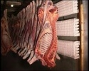 beef carcass - product's photo