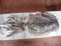 cuttle fish - product's photo