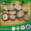 shiitake mushroom, smooth mushroom - product's photo
