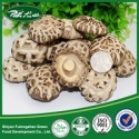 wholesale cheap dried shiitake mushroom - product's photo