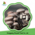 chinese bulk frozen shiitake mushroom - product's photo