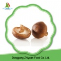 high quality frozen mushroom shiitake - product's photo
