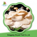 fresh king oyster mushroom spawn - product's photo