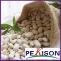 crop long shape white kidney bean - product's photo