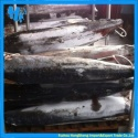 frozen blue marlin fish factory - product's photo