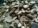 hot selling frozen white button mushroom - product's photo